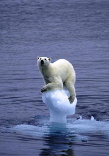 """Document de travail à partir des propositions de MACS: """"s'adapter au changement climatique"""""""